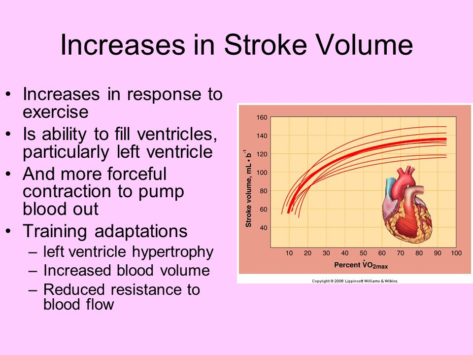 Training Adaptations: Heart Eccentric hypertrophy –Slight thickening in left ventricle walls –Increases left ventricular cavity size Therefore increases stroke volume