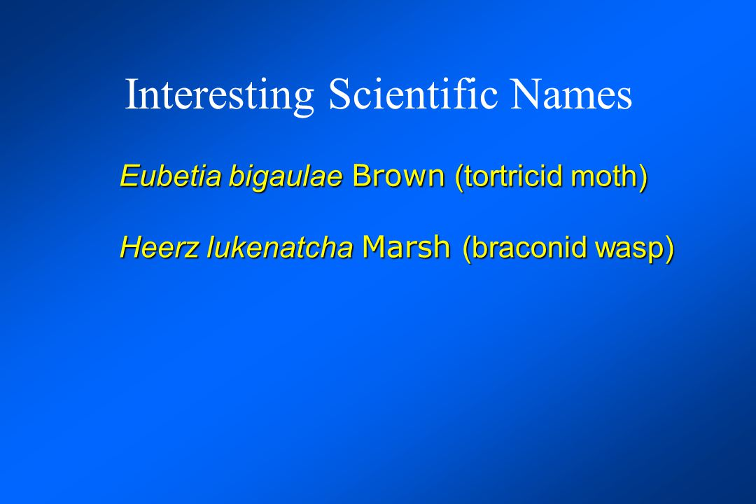 Interesting Scientific Names Eubetia bigaulae Brown (tortricid moth) Heerz lukenatcha Marsh (braconid wasp) Pieza rhea Evenhuis (mythicomyiid fly)
