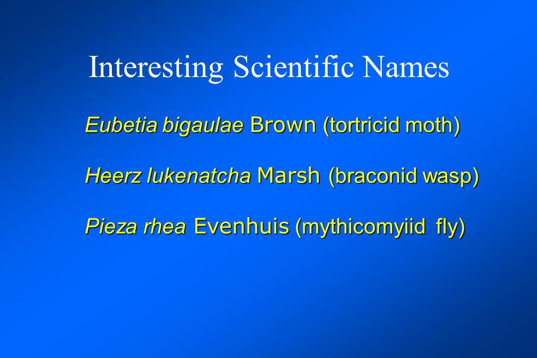 Interesting Scientific Names Eubetia bigaulae Brown (tortricid moth) Heerz lukenatcha Marsh (braconid wasp) Pieza rhea Evenhuis (mythicomyiid fly) Verae peculya Marsh (braconid wasp)