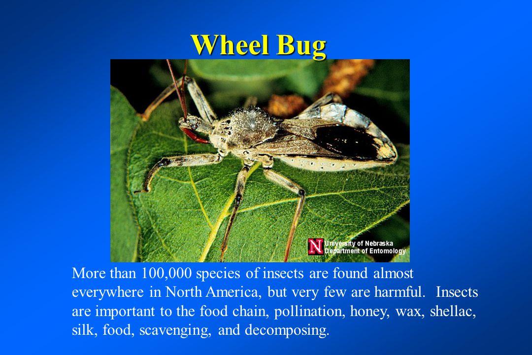 Lady beetle adult and larva - good or bad.