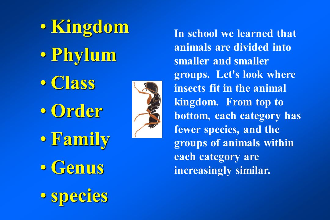 Kingdom- animalKingdom- animal Phylum - arthropodPhylum - arthropod Class - insectClass - insect Order - dipteraOrder - diptera Family - muscidaeFamily - muscidae Genus - MuscaGenus - Musca species - domesticaspecies - domestica Using the house fly as an example.