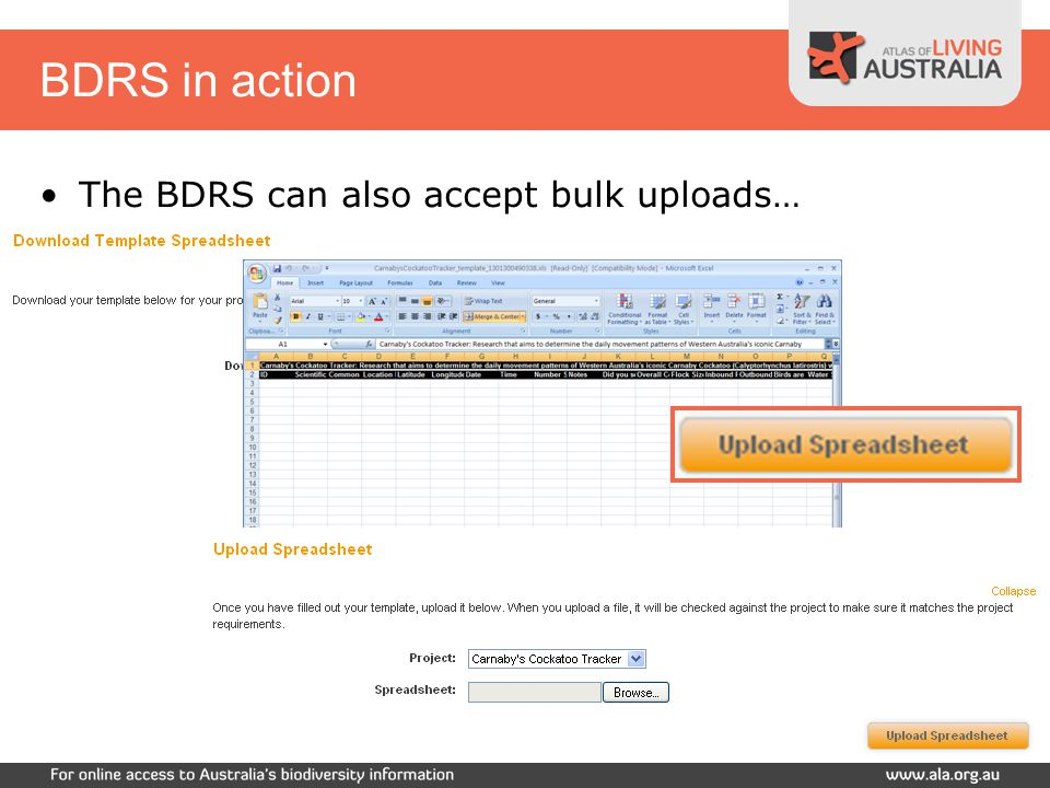 BDRS in action Log into the site Review a Project Download Data