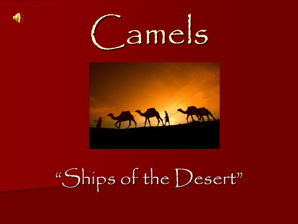Ships of the Desert Camels