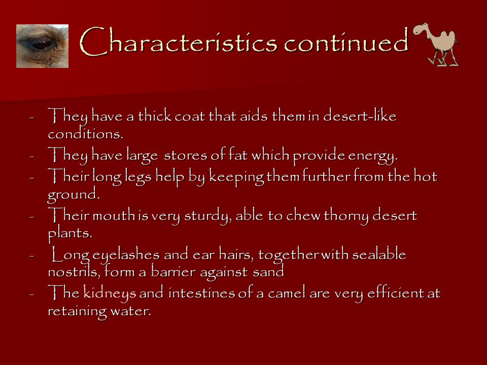 Characteristics continued - They have a thick coat that aids them in desert-like conditions.