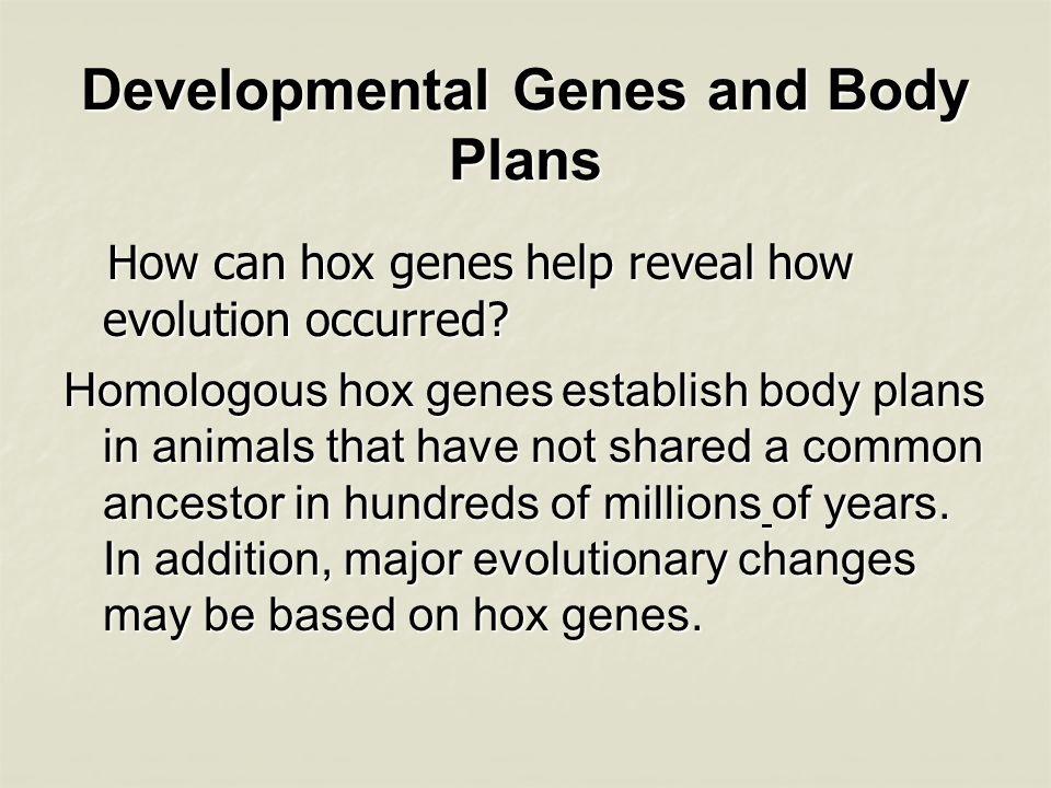 Developmental Genes and Body Plans Is the following sentence true or false.
