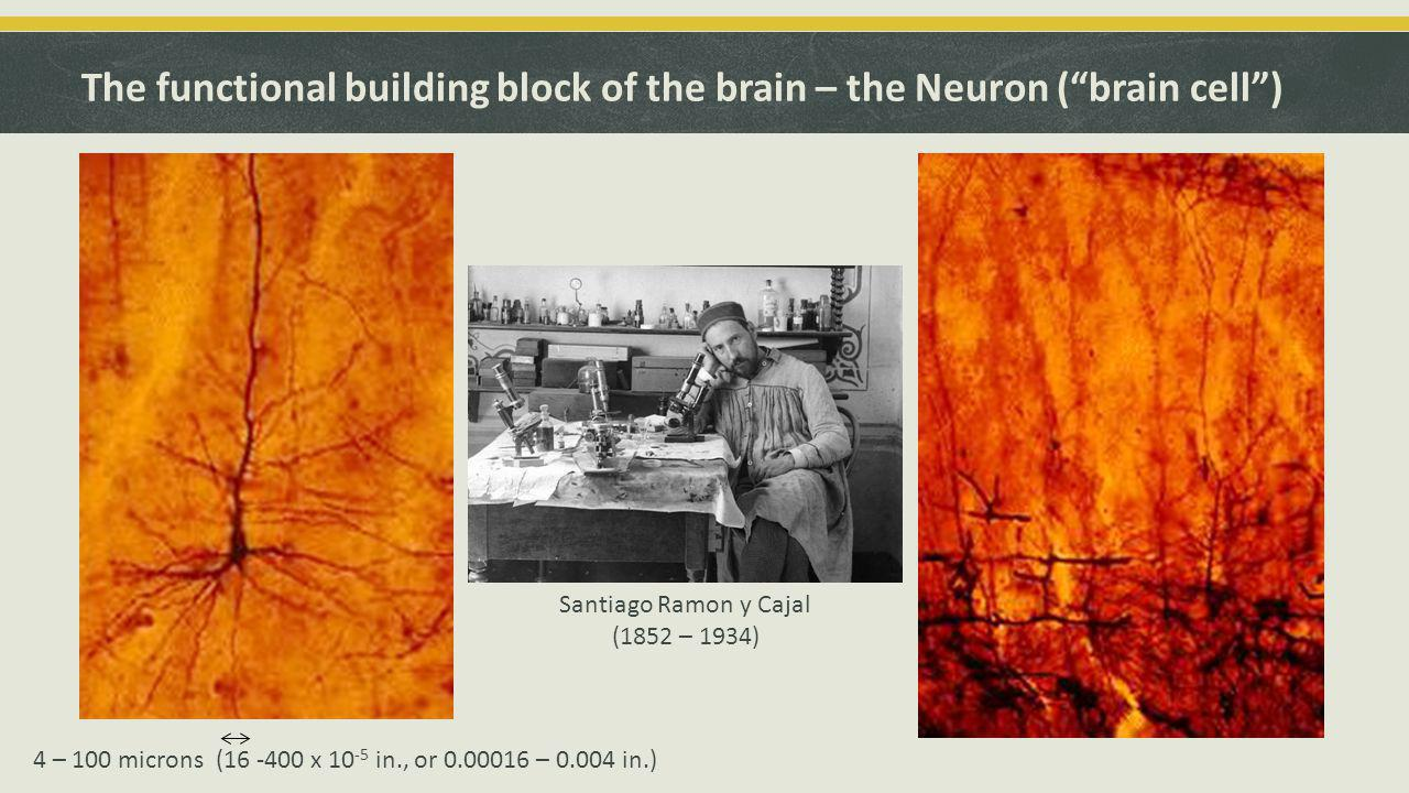 Validation for Cajal left: Cajal Legacy Instituto Cajal (CSIC), Madrid | right: Courtesy Thomas Deerink and Mark Ellisman (NCMIR, UCSD) 1906 Nobel Prize in Medicine and Physiology