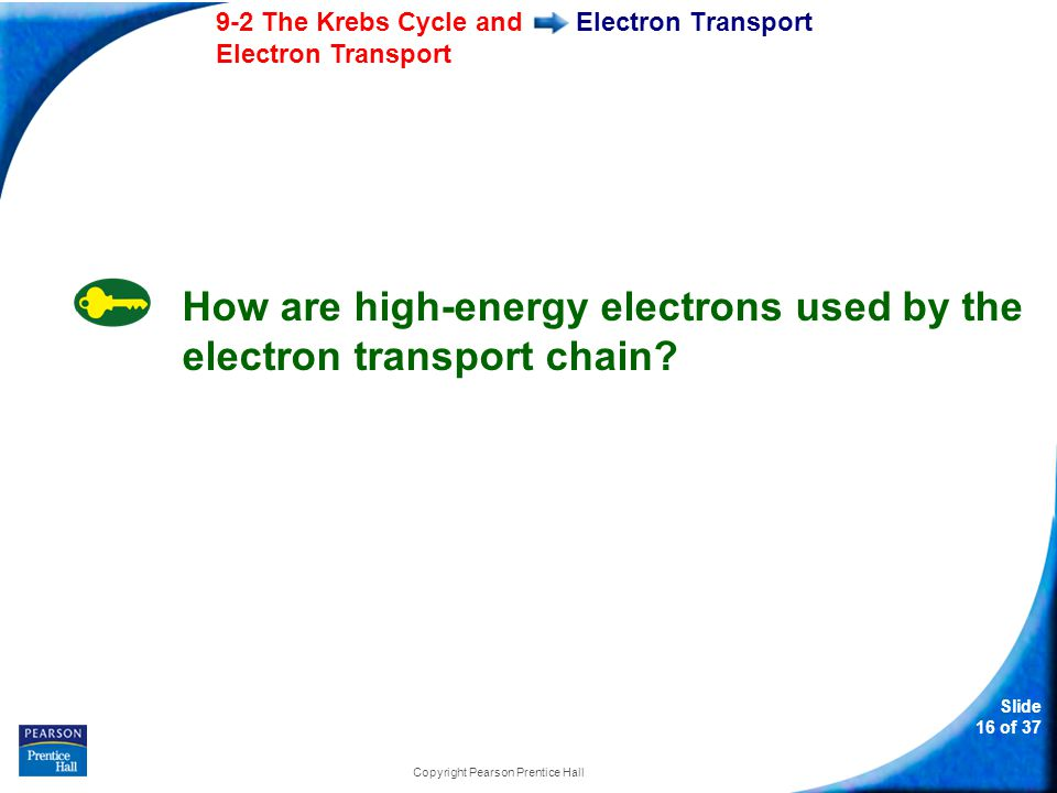 Slide 17 of 37 9-2 The Krebs Cycle and Electron Transport Copyright Pearson Prentice Hall Electron Transport The electron transport chain uses the high- energy electrons from the Krebs cycle to convert ADP into ATP.