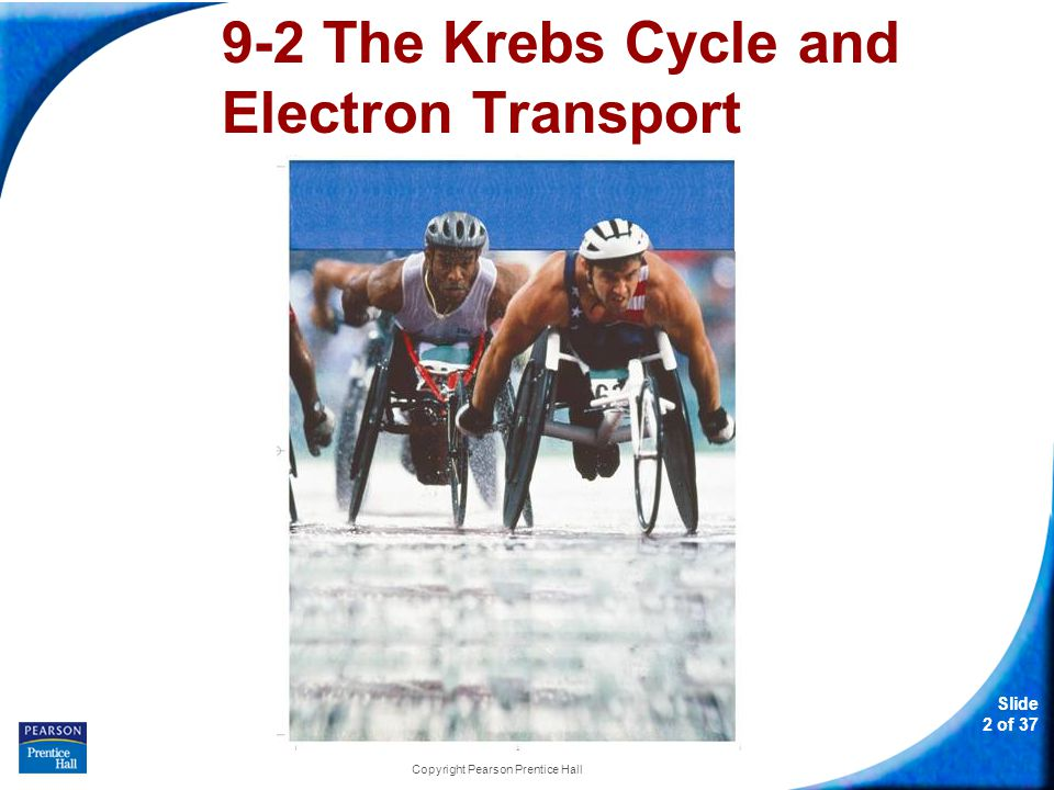 Slide 3 of 37 Copyright Pearson Prentice Hall 9-2 The Krebs Cycle and Electron Transport Oxygen is required for the final steps of cellular respiration.