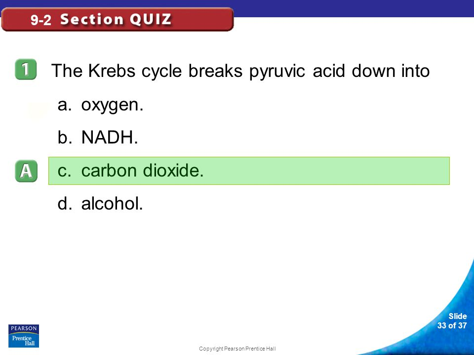 Slide 34 of 37 Copyright Pearson Prentice Hall 9-2 What role does the Krebs cycle play in the cell.