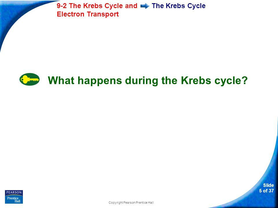 Slide 6 of 37 9-2 The Krebs Cycle and Electron Transport Copyright Pearson Prentice Hall The Krebs Cycle During the Krebs cycle, pyruvic acid is broken down into carbon dioxide in a series of energy-extracting reactions.