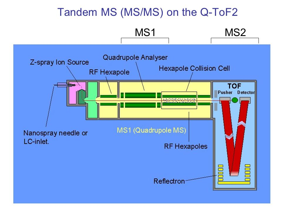 On-line LC-MSMS on the Q-ToF2 : peptides from a single protein Chromatogram Fragment Mass spectrum (MSMS): fragments from one peptide time Separate peptides over a 60 minute LC run, perform tandem MS on each peptide Survey Mass Spectrum - intact peptides mass/charge