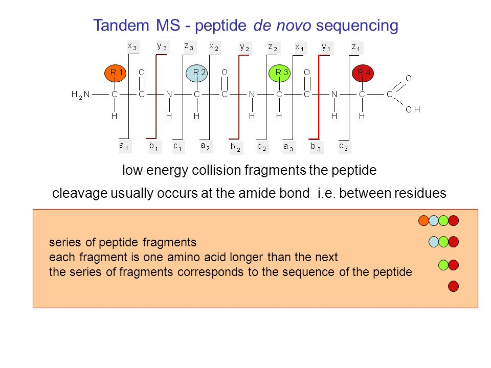 peptide de novo sequencing the series of fragments corresponds to the sequence of the peptide