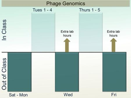 In Class Out of Class Tues 1 - 4Thurs 1 - 5 Sat - Mon WedFri Extra lab hours Phage Genomics Extra lab hours.