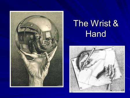 The Wrist & Hand. Bony Anatomy The Wrist - Made up of 8 bones, called carpals - Transverse 2 rows The Hand - Made up of 5 metacarpals and 5 digits - One.