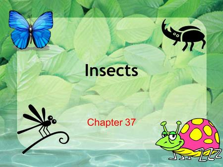 Insects Chapter 37.