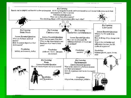 Insects Organisms and Environment Key Learning: Insects can be helpful and harmful to the environment. All living things have needs and must depend on.