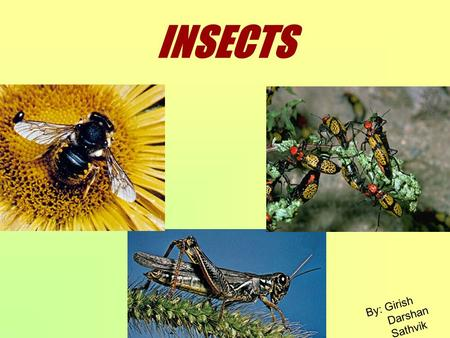INSECTS By: Girish Darshan Sathvik. Insect ??? Any member of the class Insecta, the largest class of the phylum Arthropoda is called an insect. In a popular.