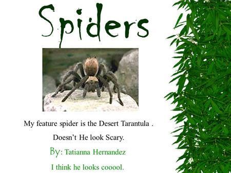 By: Tatianna Hernandez I think he looks cooool. Spiders My feature spider is the Desert Tarantula. Doesn't He look Scary.