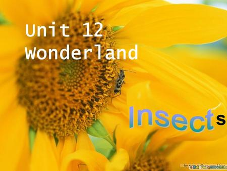 Unit 12 Wonderland s Which letter is the name of an insect? Which letter is a drink? Which letter is a vegetable? Which letter is a lot of water? Which.