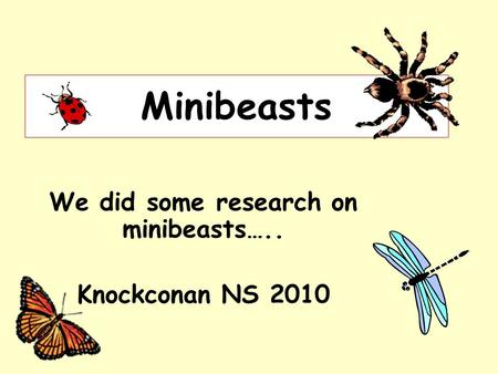 Minibeasts We did some research on minibeasts….. Knockconan NS 2010.