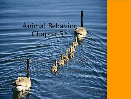 Animal Behavior Chapter 51 Why does the caged bird sing? Big Idea #1: Evolution.