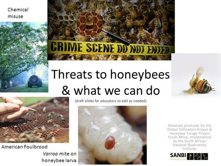 Threats to honeybees & what we can do (draft slides for educators to edit as needed) Varroa mite on honeybee larva American Foulbrood Chemical misuse Materials.