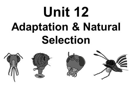 Unit 12 Adaptation & Natural Selection. Pre-Assessment 1. A man becomes a fireman. While working at his job, he grows strong and his muscles get big due.