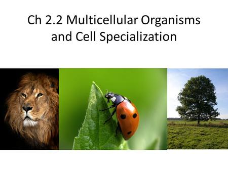 Ch 2.2 Multicellular Organisms and Cell Specialization
