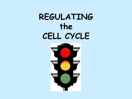 REGULATING the CELL CYCLE. CELL DIVISION GENES Some cells divide frequently (some human skin cells divide once/hour) Some cells divide occasionally (liver.
