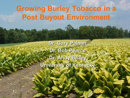 Growing Burley Tobacco in a Post Buyout Environment Dr. Gary Palmer Dr. Bob Pearce Dr. Andy Bailey University of Kentucky.