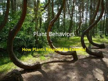 How Plants Respond to External Stimuli