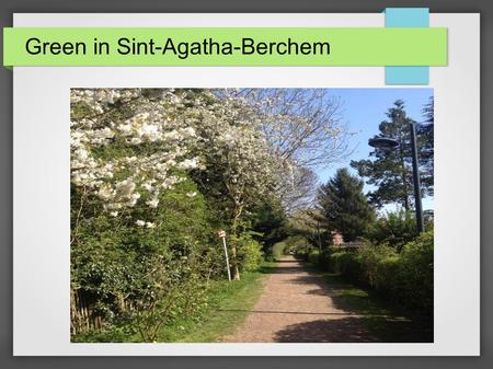 Green in Sint-Agatha-Berchem. The little gardens.