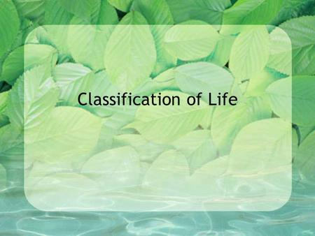 Classification of Life. Why Classify? There are more than 2 ½ Million species of organisms on earth – and more to be discovered! When you go into the.