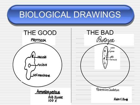 BIOLOGICAL DRAWINGS THE GOOD THE BAD. BIOLOGICAL DRAWING RULES Use unlined paper. Draw in pencil. Always print. Print the title in capital letters above.