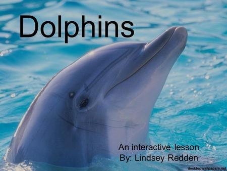Dolphins An interactive lesson By: Lindsey Redden.