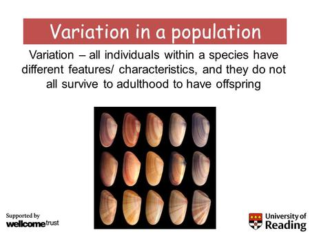 Variation in a population Variation – all individuals within a species have different features/ characteristics, and they do not all survive to adulthood.