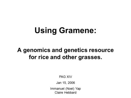 Using Gramene: A genomics and genetics resource for rice and other grasses. PAG XIV Jan 15, 2006 Immanuel (Noel) Yap Claire Hebbard.