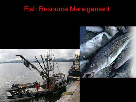 Fish Resource Management About 80% of fish harvested come from oceans. Why is this obvious?  Most of the world's water is ocean, therefore it would.