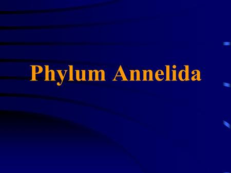 Phylum Annelida. Metamerism Have an anterior prostomium and posterior pygidium; both nonsegmented Body is divided into a linear series of similar parts.