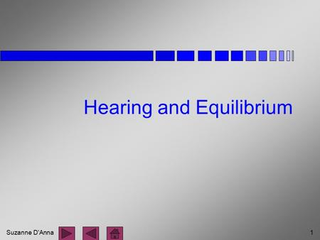 Suzanne D'Anna1 Hearing and Equilibrium. Suzanne D'Anna2 Parts of the Ear n external ear n middle ear n inner ear.