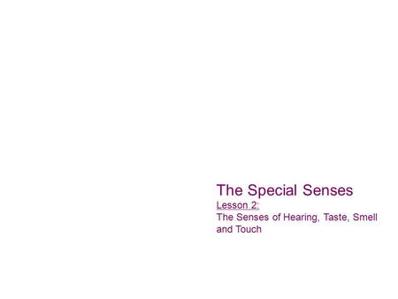 The Special Senses Lesson 2: