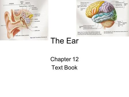 The Ear Chapter 12 Text Book.
