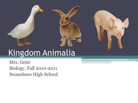 Kingdom Animalia Mrs. Geist Biology, Fall 2010-2011 Swansboro High School.