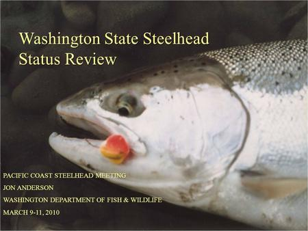 Washington State Steelhead Status Review PACIFIC COAST STEELHEAD MEETING JON ANDERSON WASHINGTON DEPARTMENT OF FISH & WILDLIFE MARCH 9-11, 2010.