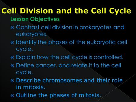 Lesson Objectives  Contrast cell division in prokaryotes and eukaryotes.  Identify the phases of the eukaryotic cell cycle.  Explain how the cell cycle.