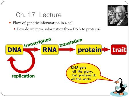 Ch. 17 Lecture Flow of genetic information in a cell How do we move information from DNA to proteins? transcription translation replication protein RNA.