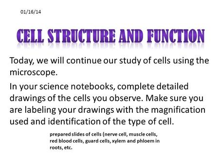 Today, we will continue our study of cells using the microscope. In your science notebooks, complete detailed drawings of the cells you observe. Make sure.