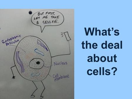 What's the deal about cells?. Cells are the basic units of living things.