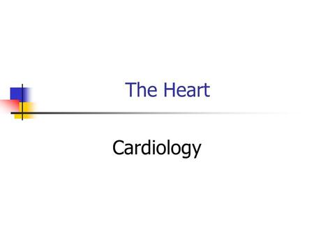 The Heart Cardiology. Physical Characteristics Situated between the lungs in the mediastinum About the size of a clenched fist Cone or pyramid shape,