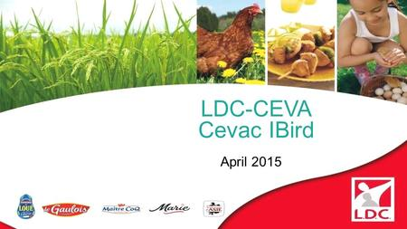 LDC-CEVA Cevac IBird April 2015. 1.Presentation of LDC group 2.French Infectious Bronchitis epidemiology 3.Actions 4.Monitoring implementation 5.Results.
